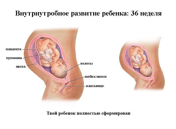 Восьмой месяц беременности фото ребенка