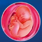 беременность 37 недель