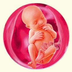 развитие ребенка на 24 неделе беременности