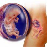 беременность 13 недель