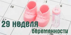 развитие ребенка на 29 неделе беременности