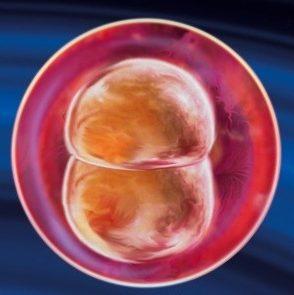 развитие ребенка по дням от зачатия
