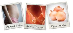 развитие ребенка на 17 неделе беременности