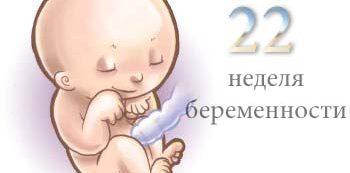 развитие ребенка на 22 неделе беременности