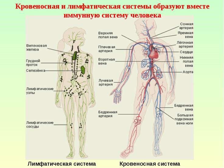 уважении системы органов во сне суровые идеи
